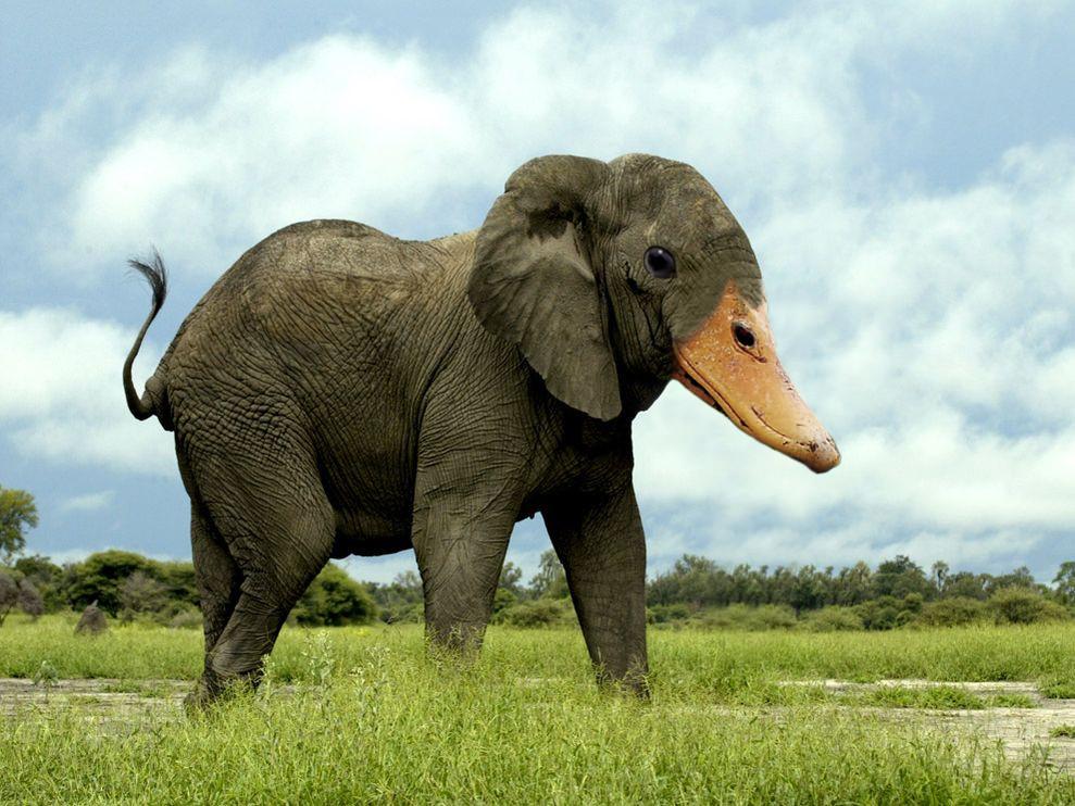 Elephant-Duck, 2013 © Animal Mashups