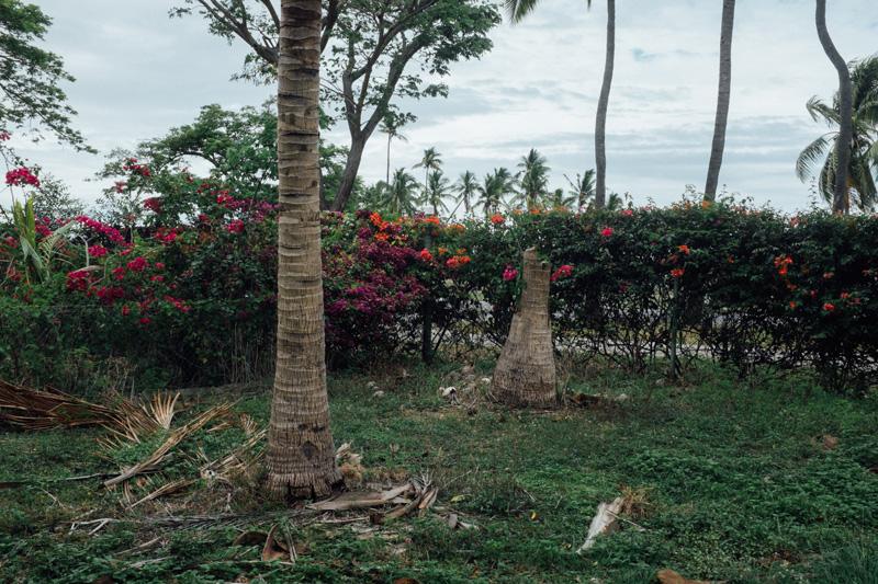 plants in paradise - broken