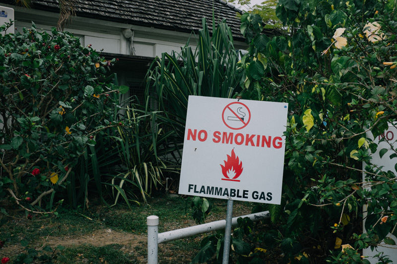 plants in paradise flammable