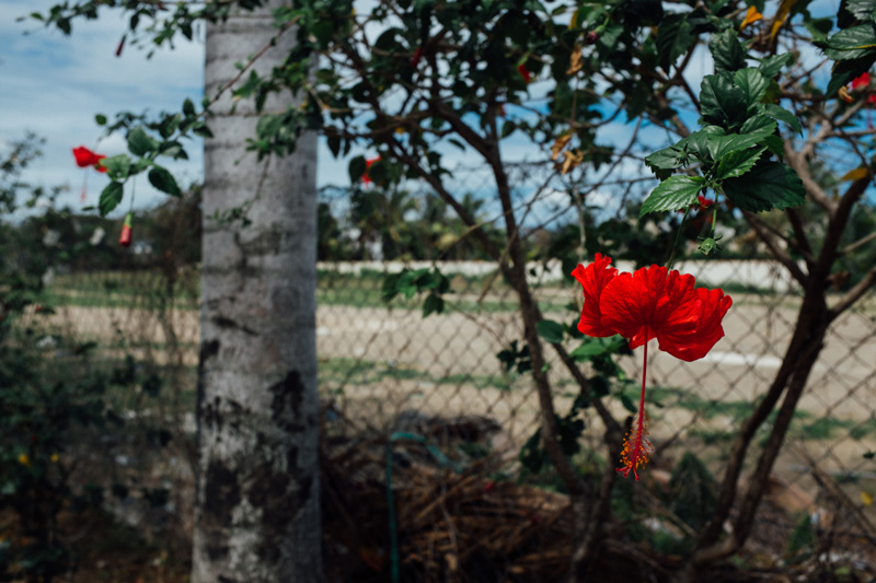 plants in paradise red