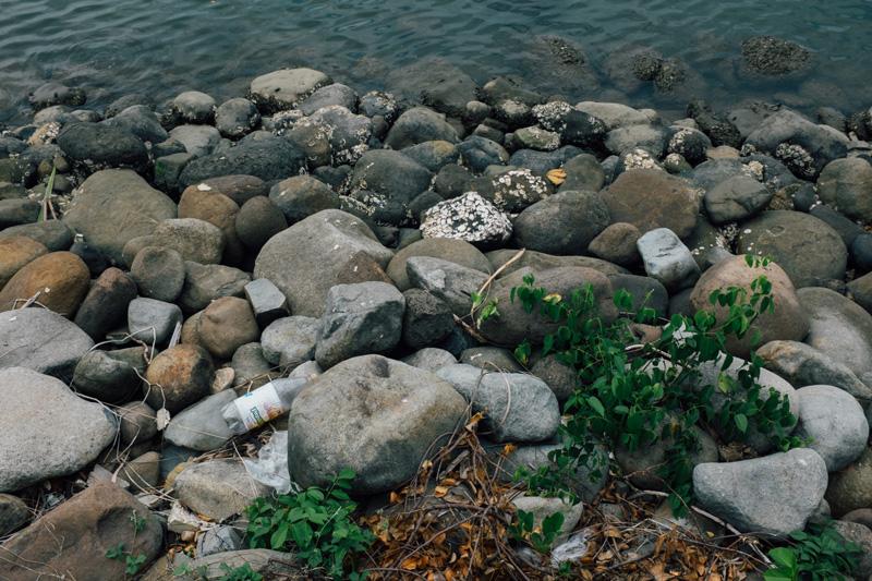 plants in paradise - shore