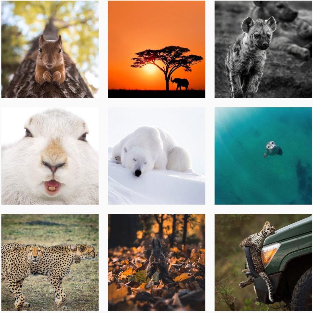 #wildlifephotography