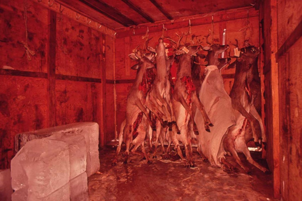 deer-storage-12001-1024x682